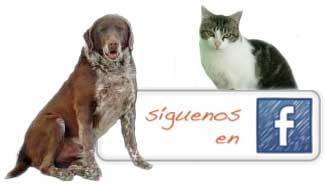 Asociaci�n protectora de Animales de Segovia en Facebook