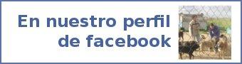Perfil de la Protectora de Animales de Segovia en Facebook
